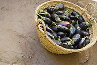A basket of purple aubergines at the market in Fez, Morocco.