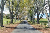 The driveway at Ashlawn-Highlands, the home of James Madison in Albemarle County, Va  Photo/Andrew Shurtleff
