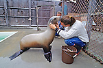 Sea Lion & Leif Johnson