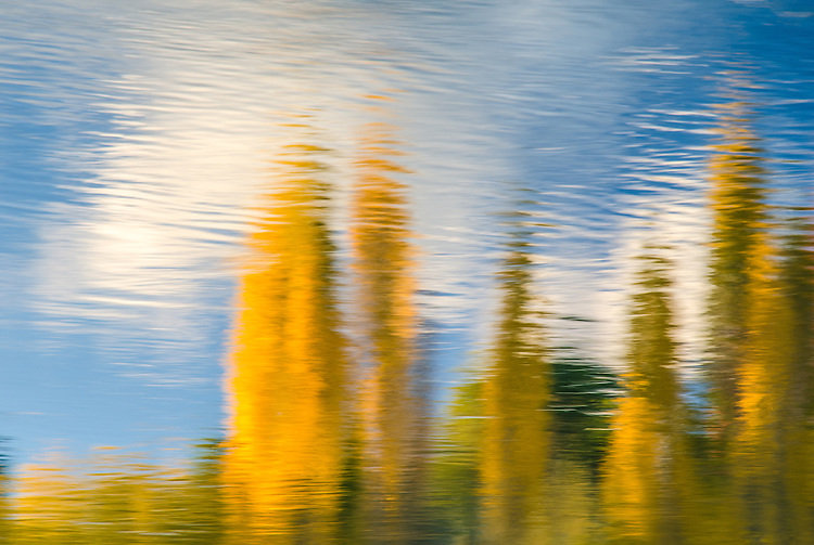 Autumn Poplar Impressionism, New Zealand - stock photo, canvas, fine art print