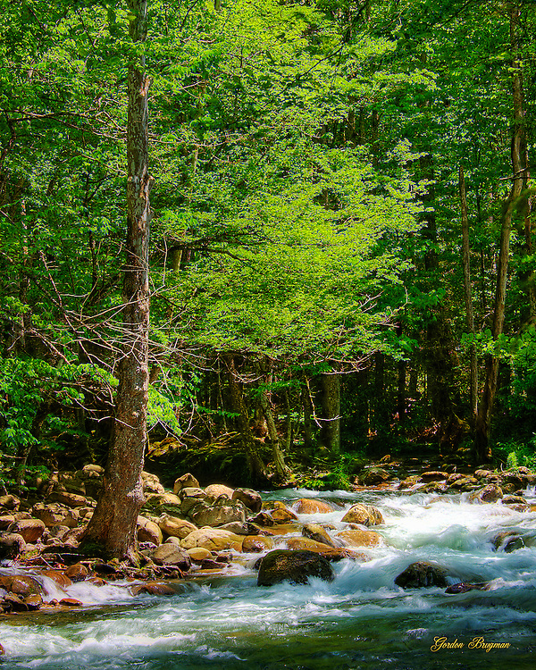 A lone tree stands at the side of the Greenbrier River in the Great Smoky Mountains national Park.
