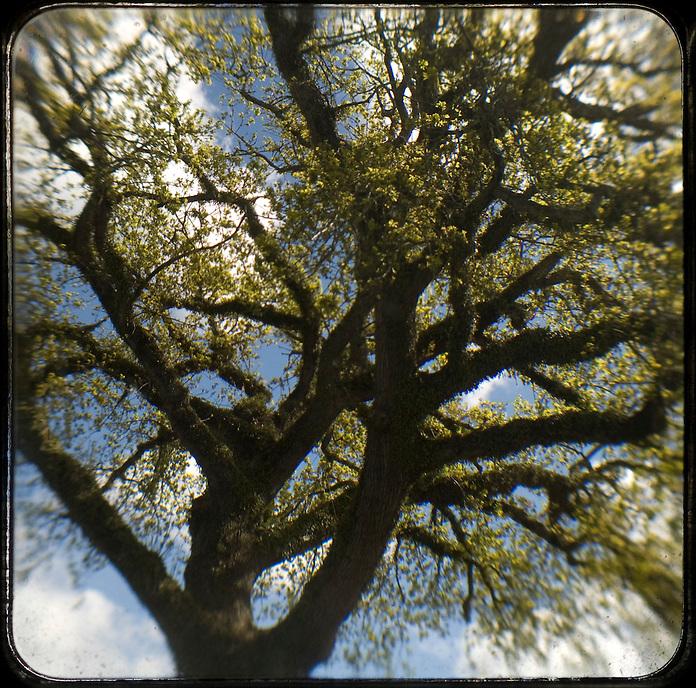 Oak 2011