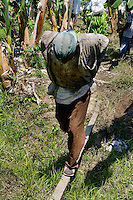 A Colombian worker pulling the aircable fully loaded with bananas on the banana plantation in Aracataca, Colombia, 14 March 2006. Eighty percent of the exported bananas in the world are grown in Latin America. Local farms have no other alternative than to sell for a price offered by the multinational company. When working conditions and ecology is in question, the corporations do not have any responsibility as they do not own plantations. Local governments in the attempt of organizing banana export provide low duty taxes on export, they try to eliminate social and enviromental politics to attract the big companies to their countries.