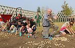 Foto: VidiPhoto<br /> <br /> VLEUTEN &ndash; Tientallen vrijwilligers hebben zaterdag langs de ecologische parkpergola in het Maximapark in Vleuten geholpen met het planten van 200.000 bloembollen. Het bollenmengsel van zes verschillende soorten die bloeien van februari tot en met juni, moet een bijvriendelijk biotoop cre&euml;ren. Bijen en vlinders krijgen zo al vroeg in het voorjaar voedsel aangeboden. Het gaat hier om een van de grootste bijenbollenprojecten van Nederland. Wethouder Kees Geldof (m) van de gemeente Utrecht plantte zaterdag de eerste bol. Het bijzondere bollenmengsel met onder andere krokussen, blauwe druifjes en anemonen is samengesteld door bollenleverancier Jac. Uittenbogaard &amp; Zonen uit Noordwijkerhout in overleg met de Nederlandse Bijenvereniging (NBV).