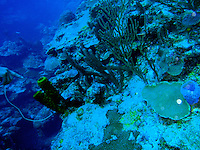 Scuba Diving, Ambergris Caye, Belize