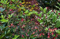 Claire Gargalli garden