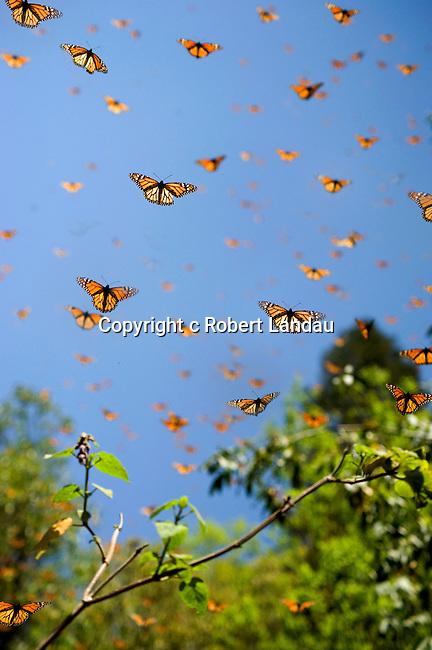 Piedra Herrada butterfly preserve in Mexico