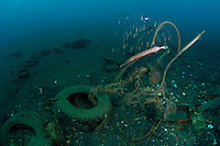 The 'muck' sites of ambon Bay are filled with man-made debris, but are very rich in unusual species.