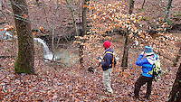 NWA Democrat-Gazette file/FLIP PUTTHOFF<br /> Leafless trees offer longer views into the forest to see sights     Nov. 30, 2015     such as this eight-foot waterfall in Dismal Hollow.