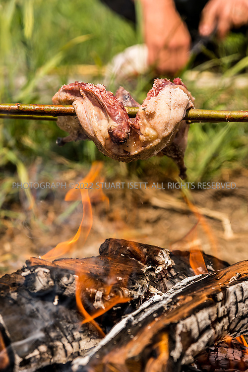 6/22/2015 &mdash; Everett, WA, USA<br /> <br /> Steven Rinella, an avid outdoorsman and hunter, prepares to cook both wild duck and domesticated chicken over an open wood fire in Everett, WASH. <br /> <br /> Here Rinella places the skewered duck over the fire on a spit built duck with branches from nearby Alder branches.<br /> <br /> <br /> Photograph by Stuart Isett<br /> &copy;2015 Stuart Isett. All rights reserved.