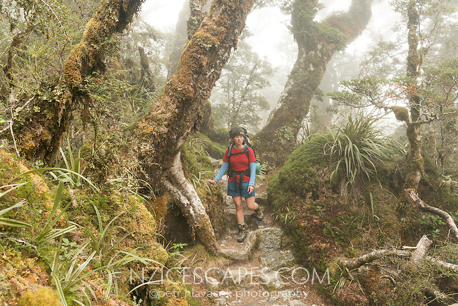 Woman tramper walking in fog through sub-alpine section of Routeburn Track with beech trees, Fiordland National Park, Southland, South Island, World Heritage Area, New Zealand