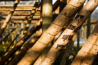 Wooden poles used for drying stockfish, Lofoten islands, Norway