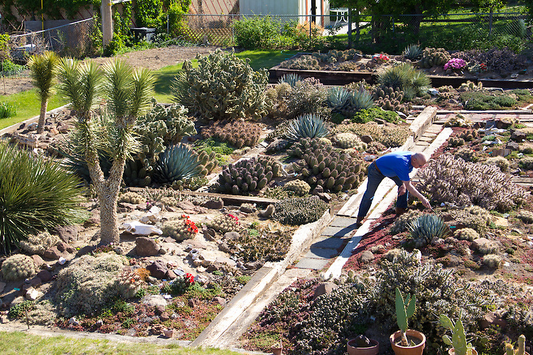 Yakima Hillside Desert Botanical Garden Cactus Eastern Washington Joel Rogers Photography