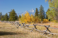 Autumn in Grand Teton National Park Wyoming