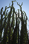 Texas Desert Flora