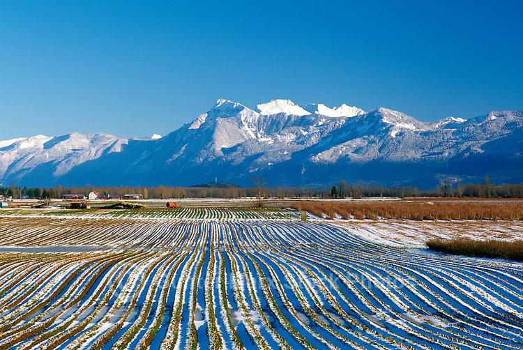 Farm field of furrows and snow cascade mountains mount cheam winter