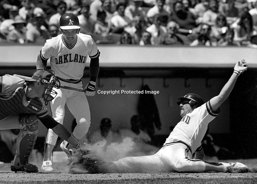 A's Carney Lansford slides into home, watched by Tony Phillips. (1986 photo by Ron Riesterer)