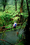 HI: Hawaii Volcanoes National Park, Fern Forest, rainforest    Photo: hivolc104..Photo copyright: Lee Foster, www.fostertravel.com, 510-549-2202, lee@fostertravel.com