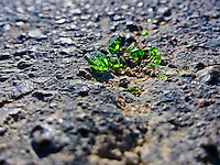 Closeup view of green broken glass pieces on pavement.
