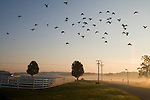 A flock of birds flies over the fence that surrounds the Horse Paddocks at the Grafton campus. (Melody Ko/Tufts University)