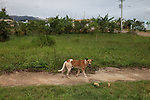 A dog walks by the so-called central park of El Nuevo Llagal. In order to make way for Barrick & Goldcorp's massive El Llagal tailings pond in the Pueblo Viejo project, hundreds of families who made up the communities of El Llagal, Fátima and Los Cacaos were relocated roughly 9 km west to an orderly, urbanized community aptly named El Nuevo Llagal (The New Llagal), on the outskirts of the city of Maimón. Locals complain that Barrick has not fulfilled its promises. Maimón, Monseñor Nouel, Dominican Republic. April 2012.