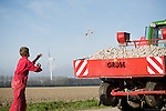 Maarten de Clerck throws potatos back in the tractor during an afternoon on the farm in Swifterbant, the Netherlands...The de Clerck family has been farming wind energy for over a decade. Together the two brothers, Stephan and Ralph are producing over 7.5MW of wind energy and selling it to the grid. The wind energy is an important crop that allows them to diversify their product. They continue to farm their land, planting potatoes and the wind mills run in the background.