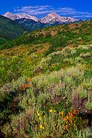 USA-Colorado-Aspen/Snowmass-Summer-Scenery & Interiors