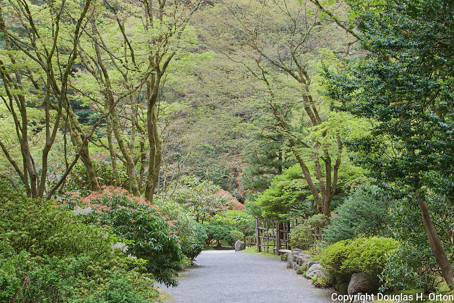 Lush Garden Walk in Portland Oregon Japanese Garden