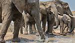 African elephants, Mashatu Reserve, Botswana