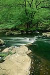 The Eno River, Eno River State Park, North Carolina