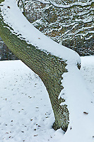 Snow-covered tree in The Cotswolds, UK