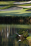 Bluffton, S.C.: A white egret hangs around a lagoon near the 1st hole of Berkeley Hall's South Course on Thursday 9/29. Photograph ©2005 Greg Smith
