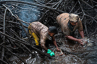 Colombian women wash the mud off the shellfish collected in the mangrove swamps on the Pacific coast, Colombia, 12 June 2010. Deep in the impenetrable labyrinth of mangrove swamps on the Pacific seashore, hundreds of people struggle everyday, searching and gathering a tiny shellfish called 'piangua'. Wading through sticky mud among the mangrove tree roots, facing the clouds of mosquitos, they pick up mussels hidden deep in mud, no matter of unbearable tropical heat or strong rain. Although the shellfish pickers, mostly Afro-Colombians displaced by the Colombian armed conflict, take a high risk (malaria, poisonous bites,...), their salary is very low and keeps them living in extreme poverty.