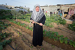 Amna Ali Attan stands in her garden in Beit Hanoun, Gaza. Her home and garden were damaged by Israeli rocket fire during the war in 2014, and she took refuge in a United Nations school. When the war ended, International Orthodox Christian Charities, a member of the ACT Alliance, helped her rehabilitate her garden and install new irrigation equipment and buy new seeds and seedlings. She produces tomatoes, onions, eggplant, squash, spinach and other crops, supporting her family of 11 people.