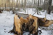 Forest Disturbances