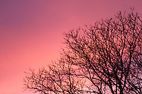 Pink dusk over a background of a tree