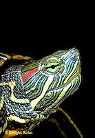 1R12-006z  Red Eared Turtle - close-up of head - Chrysemys scripta