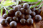 Stock pictures of the acai berry the super fruit anti oxident from the Amazon. The acai berry has been associated with helping weight loss.