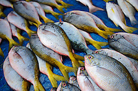 Fusiliers for sale at the Paotere fish market, Makassar, Sulawesi, Indonesia.