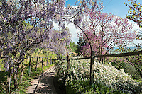 A path leading away from the wisteria pergola disappears into the surrounding countryside