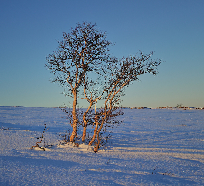 Landscape, landskap,