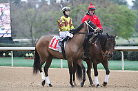 HOT SPRINGS, AR - March 11: Benner Island, #11, ridden by Giovanni Franco in the post parade prior to the Honeybee Stakes at Oaklawn Park on March 11, 2017 in Hot Springs, AR. (Photo by Ciara Bowen/Eclipse Sportswire/Getty Images)