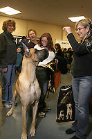 The 2008 Westminister Dog Show