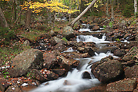 Autumn Jordan Stream #A87