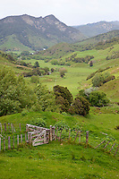 Farmland north of Gisborne, Anaura Road Valley Scene, north island, New Zealand.