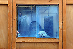 A man installs a window in a Sukah, a traditional shack, day before the Jewish holiday of Sukkot, in the ultra-orthodox Jewish neighborhood of Me'a She'arim, in Jerusalem. The holiday commemorates the biblical 40-year long wandering of the People of Israel through the desert before reaching the promised land.