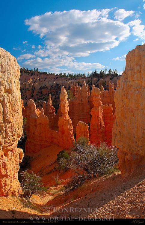 Fairyland Hoodoos at Sunset, Fairyland Canyon, Bryce Canyon National Park, Utah