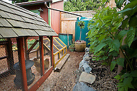 Backyard sustainable system: chickens, compost bin, rainwater cistern, mulched composted edible garden with berries