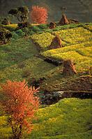 Aerial view of terraced fields, Kathmandu, Nepal. scenic landscape, agricultural, crops, farm, farming. Kathmandu, Nepal Asia.