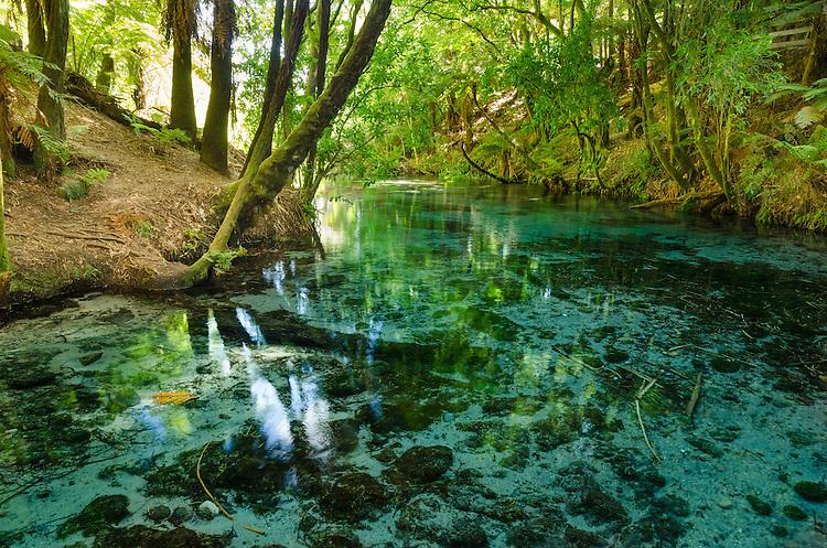 Native bush along the edge of the crystal clear waters of Hanamura Springs near Rotorua, North Island, New Zealand - stock photo, fine art, canvas print - stock photo, canvas, fine art print